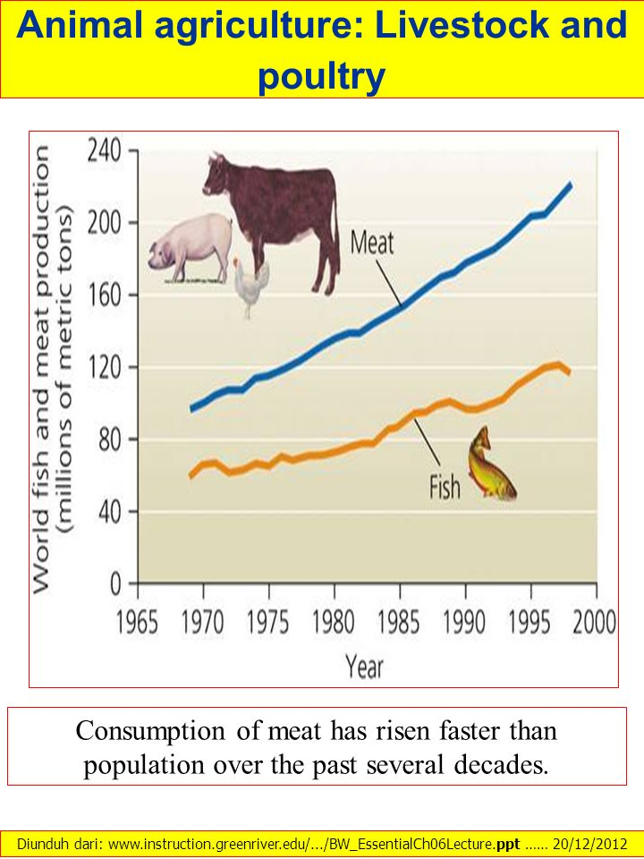 Animal agriculture: Livestock and poultry Consumption of meat has risen faster than population over the past several decades. Diunduh dari: www.instru