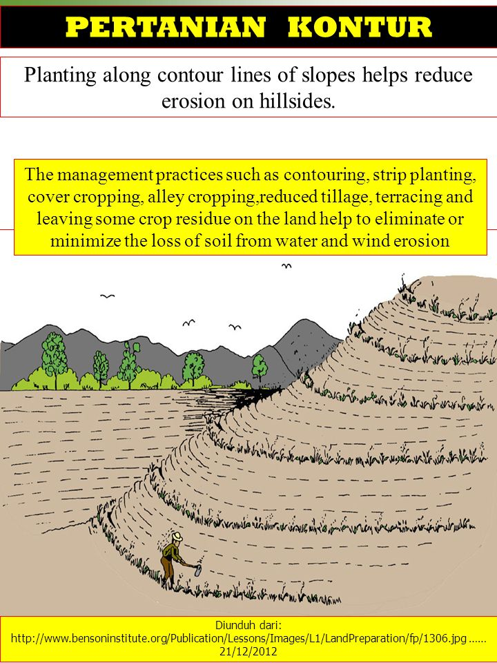 Planting along contour lines of slopes helps reduce erosion on hillsides. Diunduh dari: http://www.bensoninstitute.org/Publication/Lessons/Images/L1/L