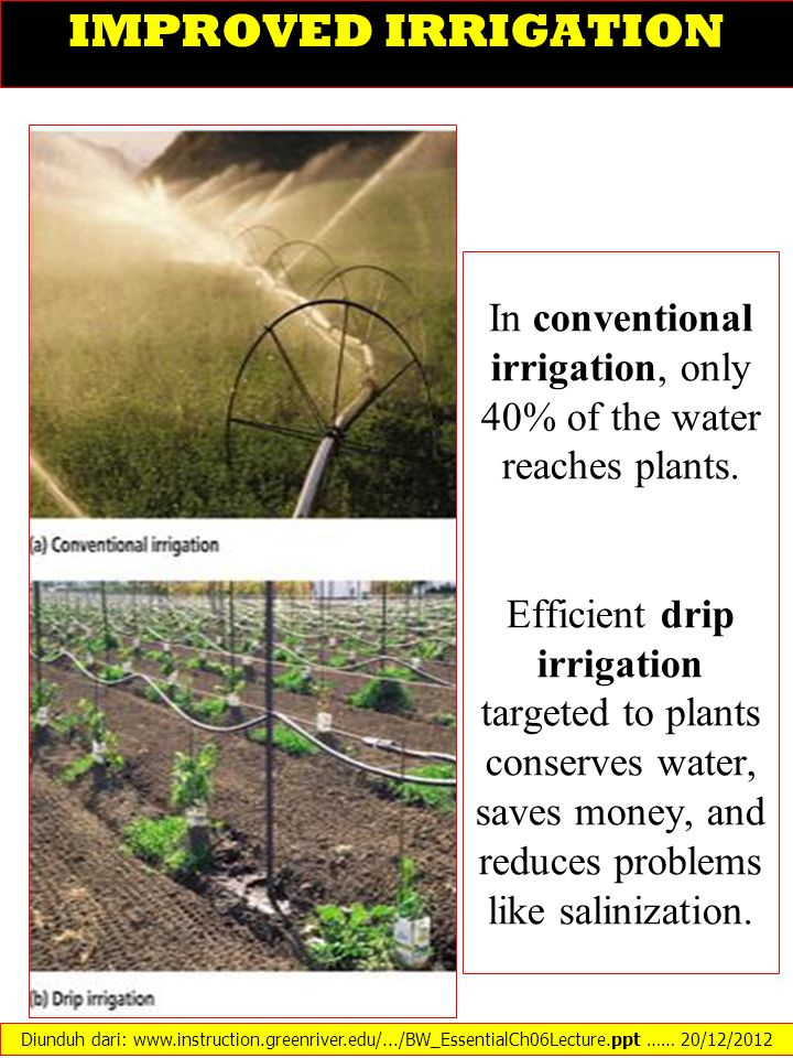 IMPROVED IRRIGATION In conventional irrigation, only 40% of the water reaches plants. Efficient drip irrigation targeted to plants conserves water, sa