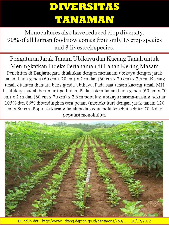 Monocultures also have reduced crop diversity. 90% of all human food now comes from only 15 crop species and 8 livestock species. Diunduh dari: http:/
