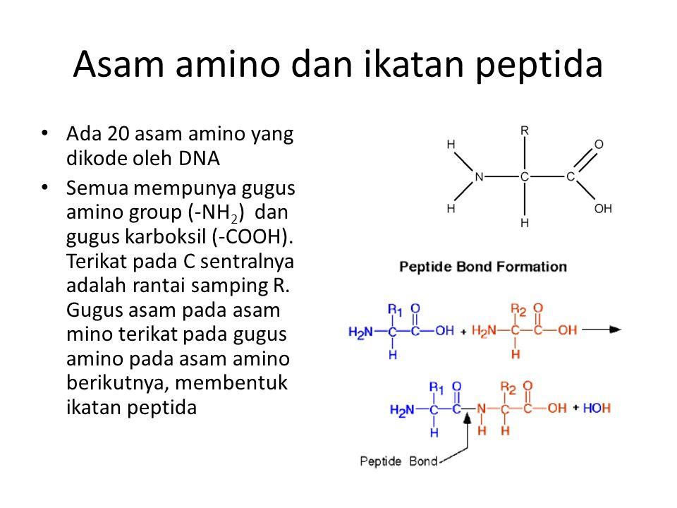 Asam amino dan ikatan peptida Ada 20 asam amino yang dikode oleh DNA Semua mempunya gugus amino group (-NH 2 ) dan gugus karboksil (-COOH). Terikat pa