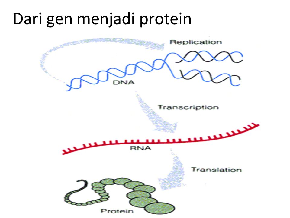 Chaperones  Function to keep a newly synthesized protein from either improperly folding or aggregating After synthesized, protein needs to fold in order to have its function The folding pattern is dictated in the amino acid sequence of the protein.