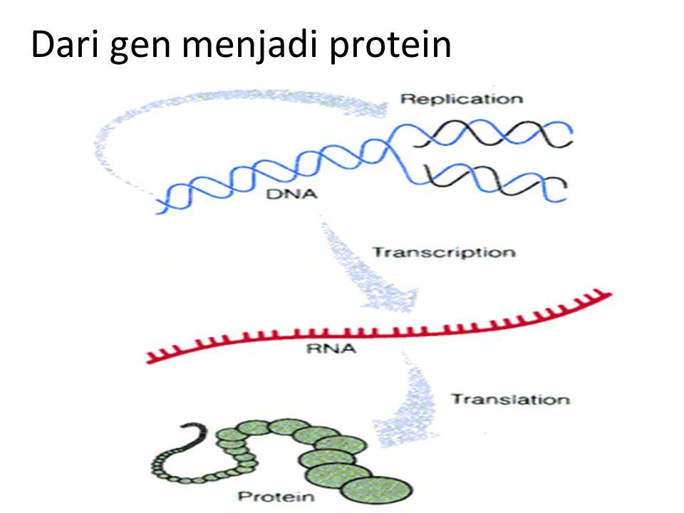Translasi  merupakan proses pembacaan kodon dan menggabungkan asam amino melalui ikatan peptida Komponen proses translasi 1.mRNA  tersusun atas kode genetik 2.Ribosom 3.tRNA bersama dengan asam amino 4.Enzim2