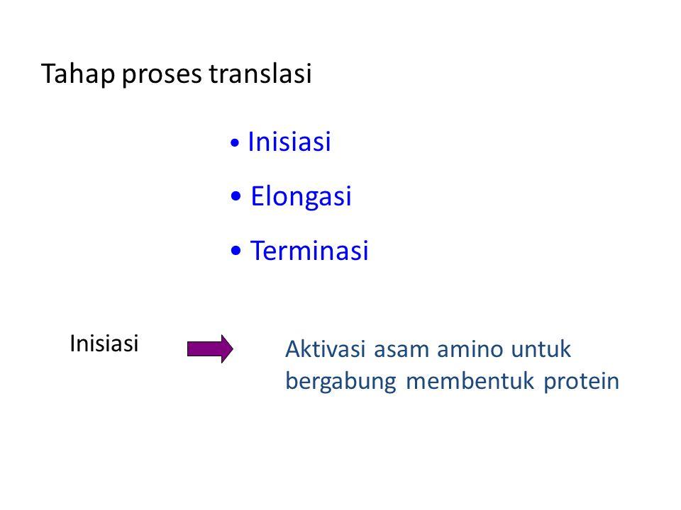 Tahap proses translasi Inisiasi Elongasi Terminasi Inisiasi Aktivasi asam amino untuk bergabung membentuk protein