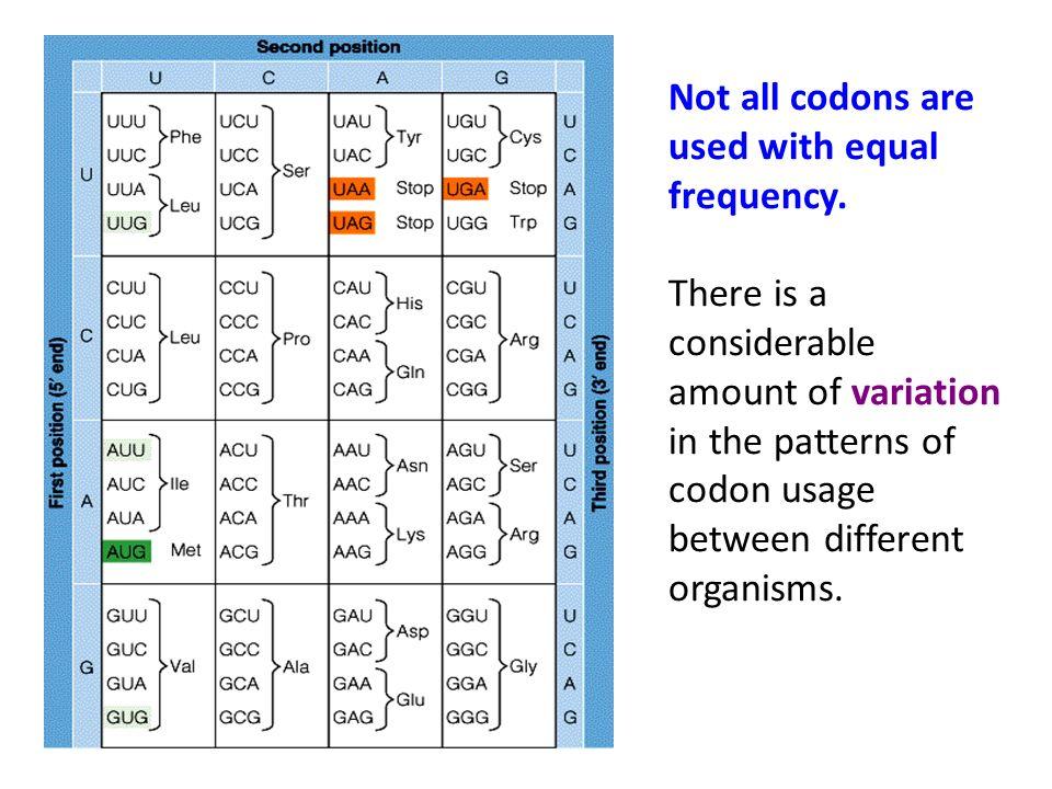 Kode Genetik Masing2 kelompok yang terdiri dari 3 nukleotida pada mRNA disebut kodon.