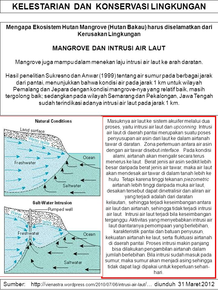 Mengapa Ekosistem Hutan Mangrove (Hutan Bakau) harus diselamatkan dari Kerusakan Lingkungan MANGROVE DAN INTRUSI AIR LAUT Mangrove juga mampu dalam me