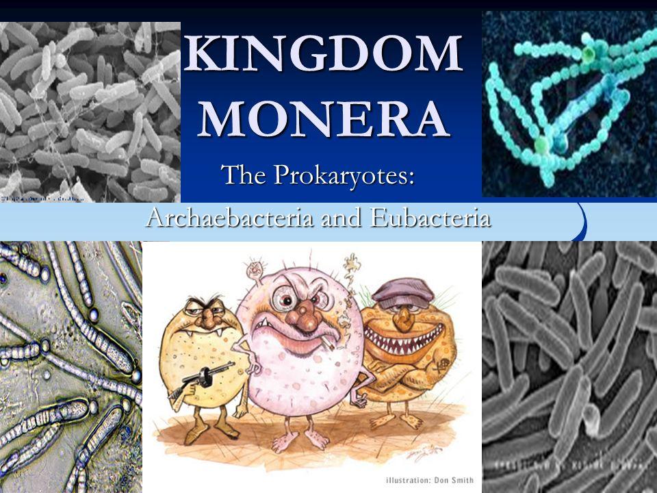 Oscillatoria http://botit.botany.wisc.edu:16080/images/130/Bacteria/Cyanobacteria/Oscillatoria/Oscillatoria_MC.jpg