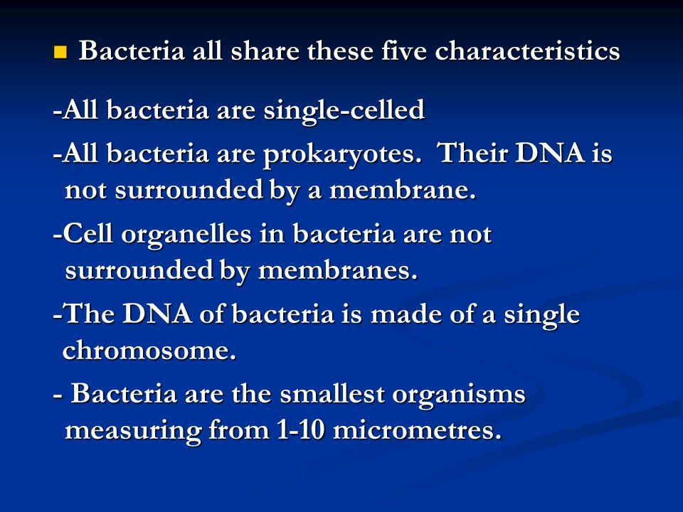 Jawaban Tubuh monoselluler/multiselluler Tubuh monoselluler/multiselluler Memiliki ribosom Memiliki ribosom Prokariotik Prokariotik Terdapat pigmen fikosianin dalam membran tilakoid Terdapat pigmen fikosianin dalam membran tilakoid Tidak mengandung plastida dan RE Tidak mengandung plastida dan RE