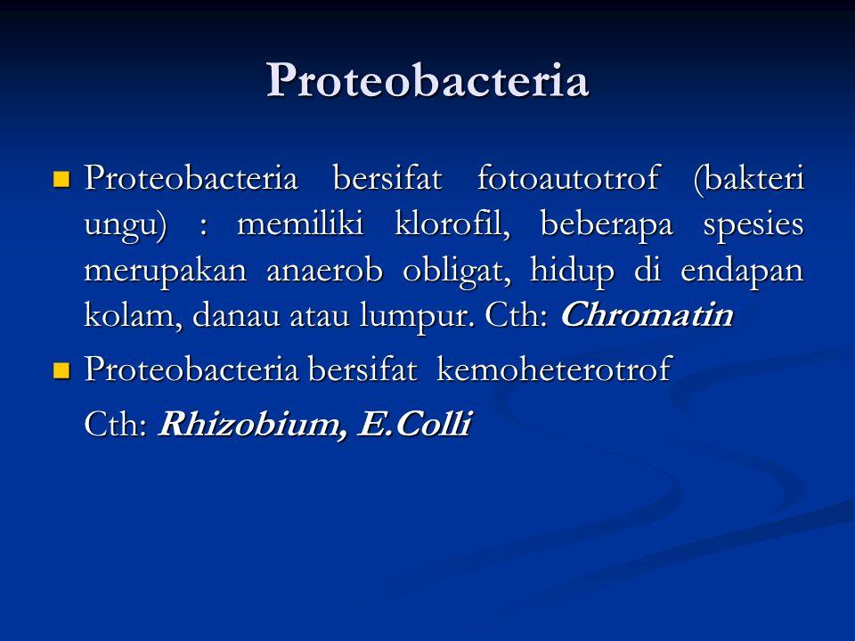 Classification of Eubacteria Proteobacteria Cyanobacteria Spirochetes Chlamydias