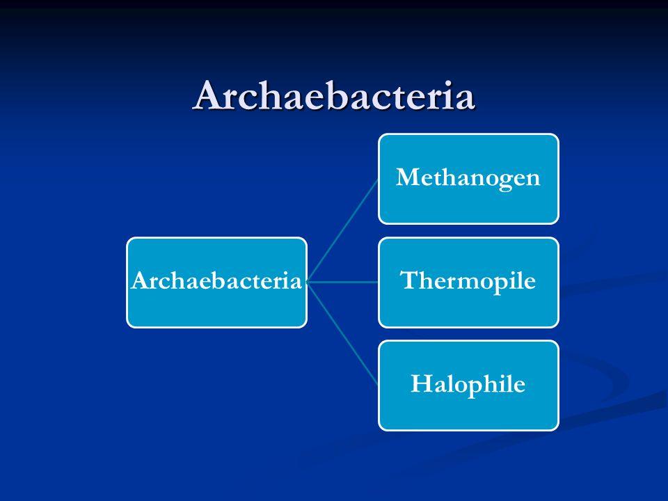 Spirochetes Berbentuk spiral dengan panjang 5-250 mikrometer Berbentuk spiral dengan panjang 5-250 mikrometer Bakteri gram negatif Bakteri gram negati