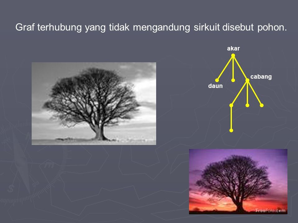 Graf terhubung yang tidak mengandung sirkuit disebut pohon. akar daun cabang