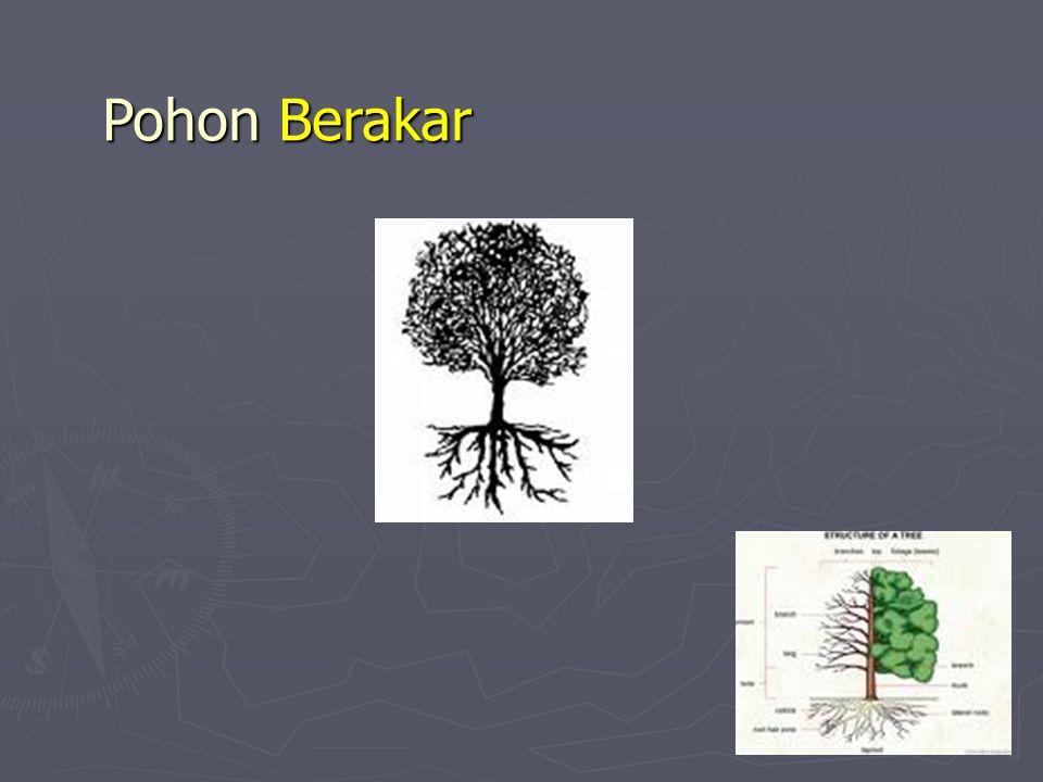 Pohon Berakar
