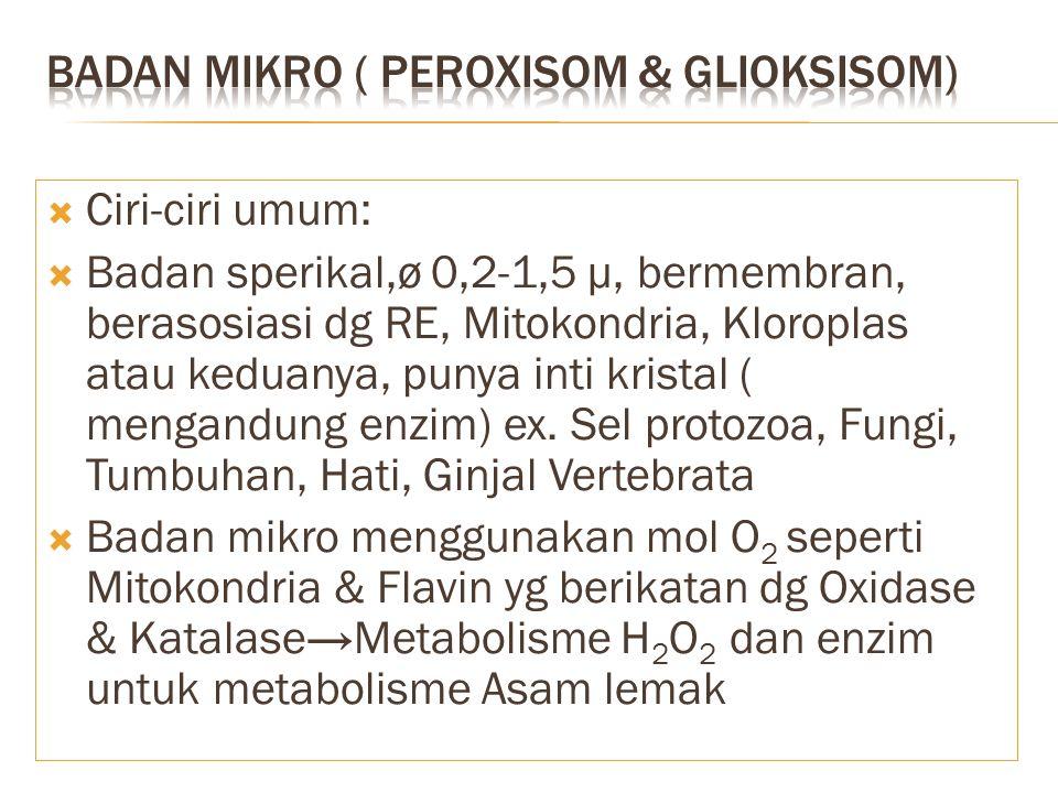  Ciri-ciri umum:  Badan sperikal,ø 0,2-1,5 μ, bermembran, berasosiasi dg RE, Mitokondria, Kloroplas atau keduanya, punya inti kristal ( mengandung e
