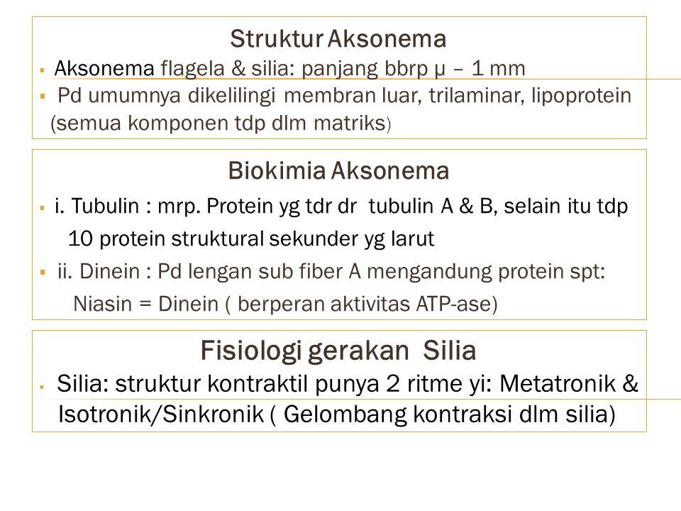 Struktur Aksonema  Aksonema flagela & silia: panjang bbrp μ – 1 mm  Pd umumnya dikelilingi membran luar, trilaminar, lipoprotein (semua komponen tdp