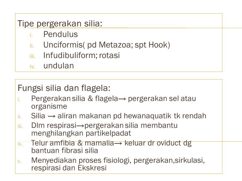 Tipe pergerakan silia: i. Pendulus ii. Unciformis( pd Metazoa; spt Hook) iii. Infudibuliform; rotasi iv. undulan Fungsi silia dan flagela: i. Pergerak