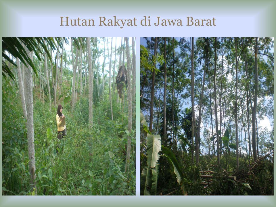 Hutan Rakyat di Jawa Barat