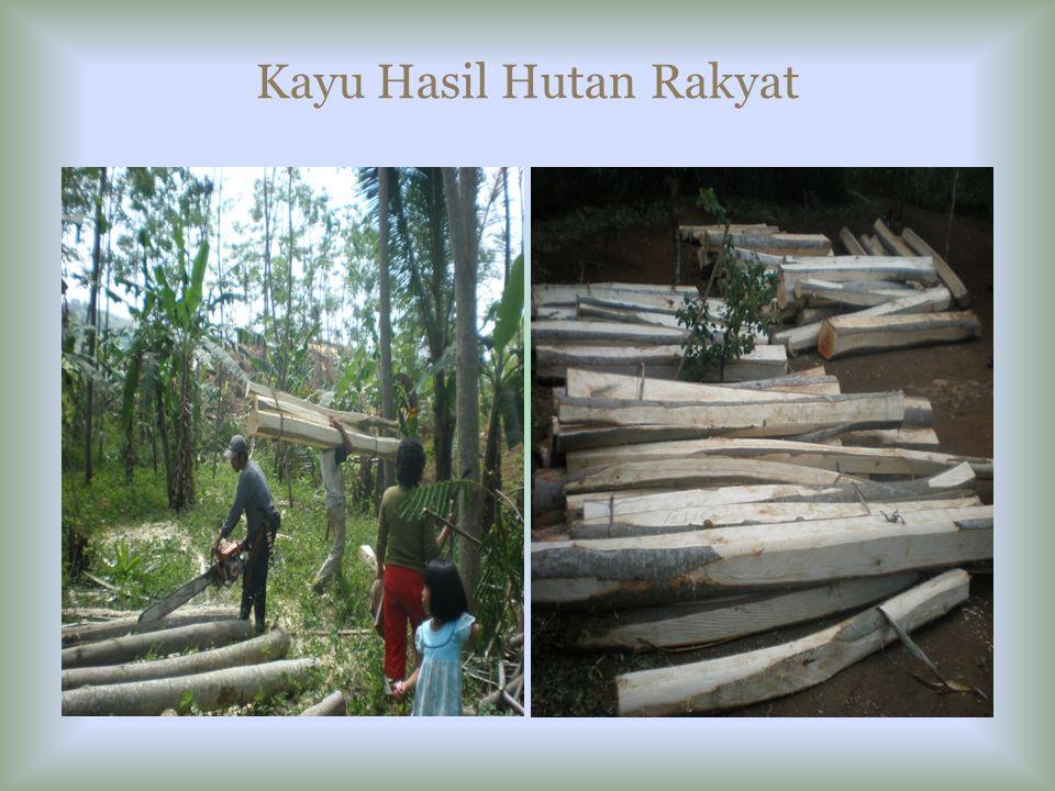 Kayu Hasil Hutan Rakyat