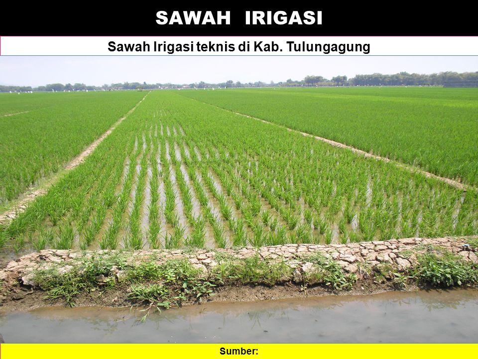 SAWAH IRIGASI Sawah Irigasi teknis di Kab. Tulungagung Sumber: