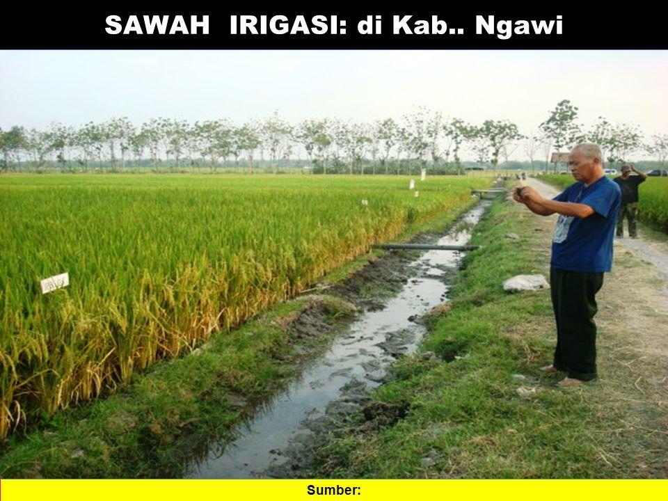 SAWAH IRIGASI: di Kab.. Ngawi Sumber: