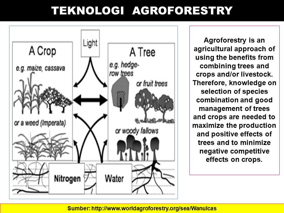TEKNOLOGI AGROFORESTRY Agroforestry is an agricultural approach of using the benefits from combining trees and crops and/or livestock. Therefore, know