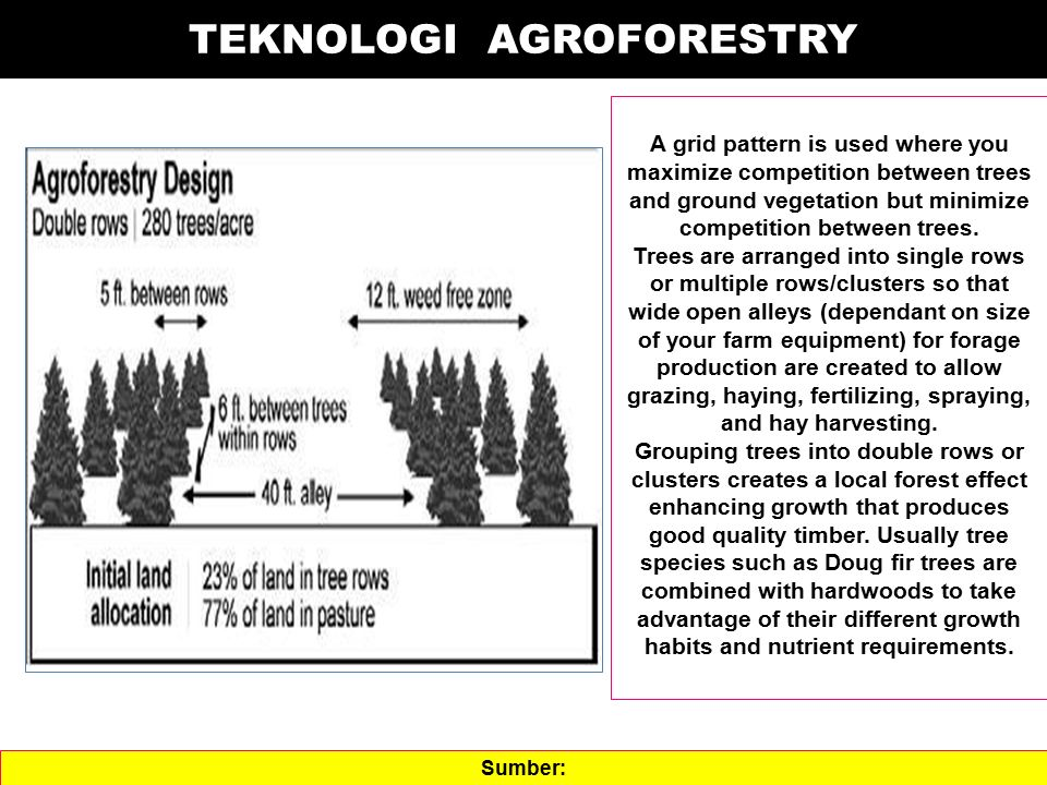 TEKNOLOGI AGROFORESTRY A grid pattern is used where you maximize competition between trees and ground vegetation but minimize competition between tree