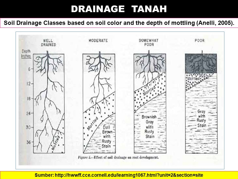 DRAINAGE TANAH Soil Drainage Classes based on soil color and the depth of mottling (Anelli, 2005). Sumber: http://hwwff.cce.cornell.edu/learning1067.h
