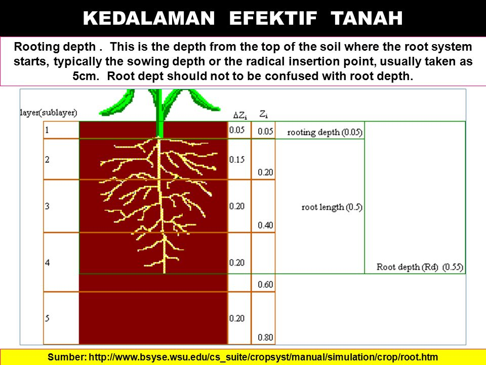 KEDALAMAN EFEKTIF TANAH Rooting depth. This is the depth from the top of the soil where the root system starts, typically the sowing depth or the radi