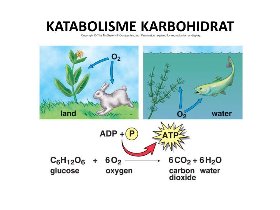 TUJUAN: Setelah mempelajari bab ini diharapkan mahasiswa mampu: 1.Menjelaskan tahap-tahap reaksi yang terjadi dalam glikolisis 2.Menjelaskan energi yang digunakan maupun yang dihasilkan pada proses glikolisis 3.Menjelaskan tahap-tahap reaksi pada siklus asam sitrat (daur Krebs) 4.Menjelaskan energi yang dihasilkan dalam siklus asam sitrat 5.Menjelaskan rantai transport elektron pada respirasi/ proses fosforilasi oksidatif 6.Menjelaskan jalur pentosa fospat 7.Menjelaskan glukoneogenesis 8.Menjelaskan jalur glioksilat