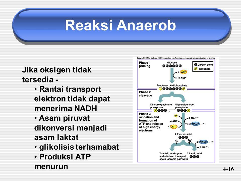 Reaksi Anaerob Jika oksigen tidak tersedia - Rantai transport elektron tidak dapat menerima NADH Asam piruvat dikonversi menjadi asam laktat glikolisi