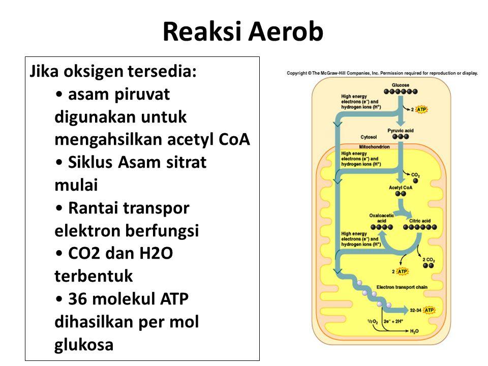 Reaksi Aerob Jika oksigen tersedia: asam piruvat digunakan untuk mengahsilkan acetyl CoA Siklus Asam sitrat mulai Rantai transpor elektron berfungsi CO2 dan H2O terbentuk 36 molekul ATP dihasilkan per mol glukosa 4-17