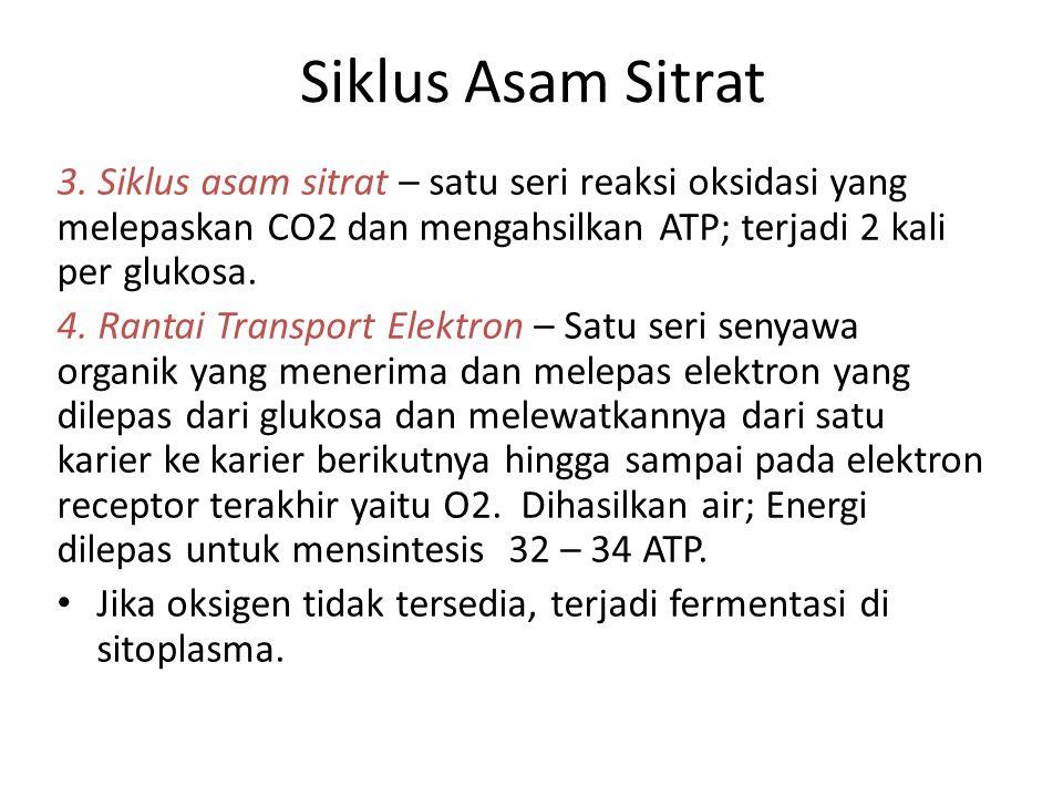 Siklus Asam Sitrat 3. Siklus asam sitrat – satu seri reaksi oksidasi yang melepaskan CO2 dan mengahsilkan ATP; terjadi 2 kali per glukosa. 4. Rantai T