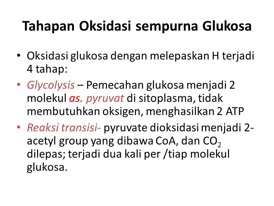 Tahapan Oksidasi sempurna Glukosa Oksidasi glukosa dengan melepaskan H terjadi 4 tahap: Glycolysis – Pemecahan glukosa menjadi 2 molekul as. pyruvat d