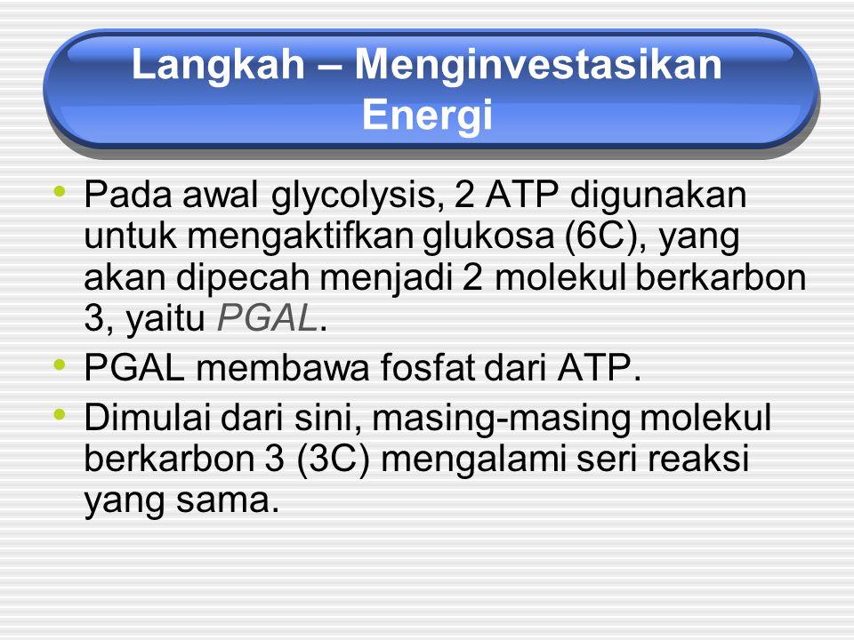 Langkah – Menginvestasikan Energi Pada awal glycolysis, 2 ATP digunakan untuk mengaktifkan glukosa (6C), yang akan dipecah menjadi 2 molekul berkarbon