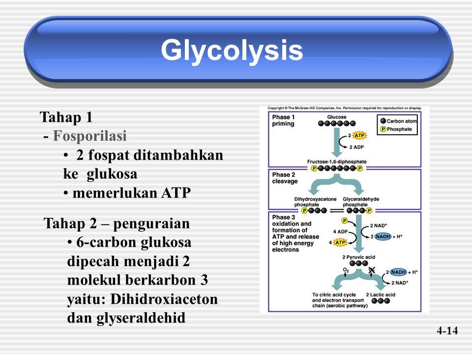 Glycolysis Tahap 1 - Fosporilasi 2 fospat ditambahkan ke glukosa memerlukan ATP Tahap 2 – penguraian 6-carbon glukosa dipecah menjadi 2 molekul berkarbon 3 yaitu: Dihidroxiaceton dan glyseraldehid 4-14