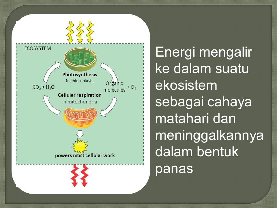 Interaction Plant -Environment  A Plant's Place in the Environment - Each species occupies a particular place in the ecosystem, known as the habitat - within its habitat, the species carries out a particular ecological role or function, known as the ecological niche of that species