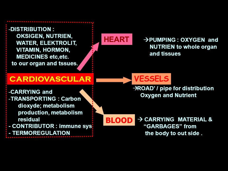 2 CARDIOVASCULAR HEART VESSELS BLOOD - -DISTRIBUTION : OKSIGEN, NUTRIEN, WATER, ELEKTROLIT, VITAMIN, HORMON, MEDICINES etc,etc. to our organ and tssue
