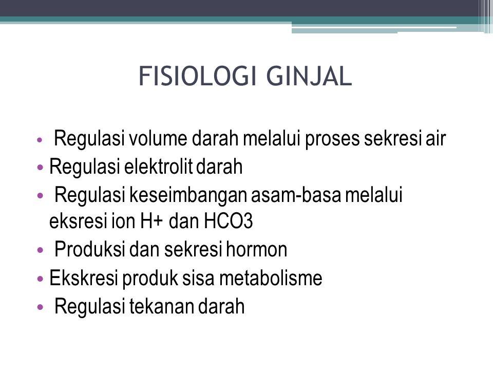 Urethra Perempuan : P  4 cm Laki –laki : P  ± 15-20 cm Letak : retroperioneal torakal 12- lumbal 3