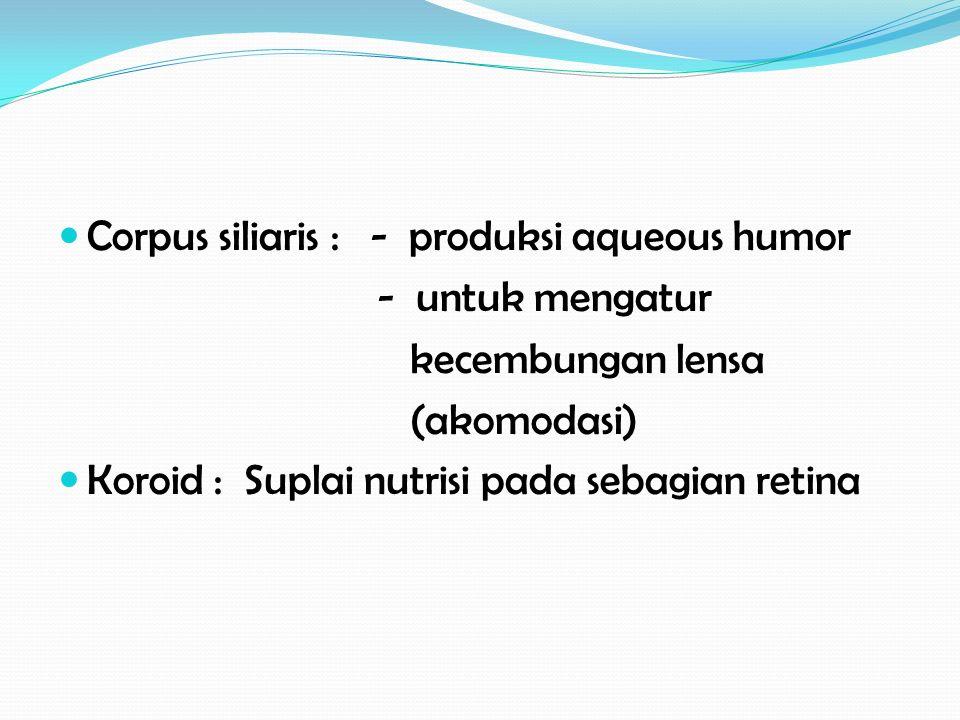 Corpus siliaris : - produksi aqueous humor - untuk mengatur kecembungan lensa (akomodasi) Koroid : Suplai nutrisi pada sebagian retina