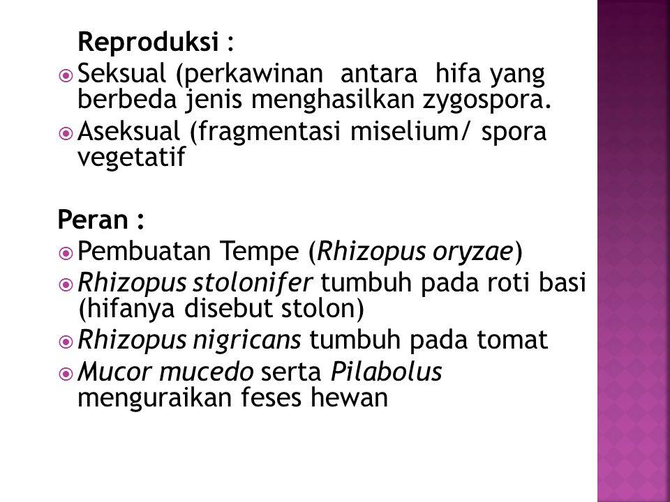 Reproduksi :  Seksual (perkawinan antara hifa yang berbeda jenis menghasilkan zygospora.  Aseksual (fragmentasi miselium/ spora vegetatif Peran : 