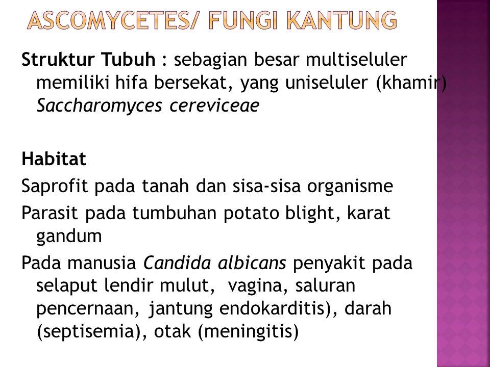 Struktur Tubuh : sebagian besar multiseluler memiliki hifa bersekat, yang uniseluler (khamir) Saccharomyces cereviceae Habitat Saprofit pada tanah dan sisa-sisa organisme Parasit pada tumbuhan potato blight, karat gandum Pada manusia Candida albicans penyakit pada selaput lendir mulut, vagina, saluran pencernaan, jantung endokarditis), darah (septisemia), otak (meningitis)