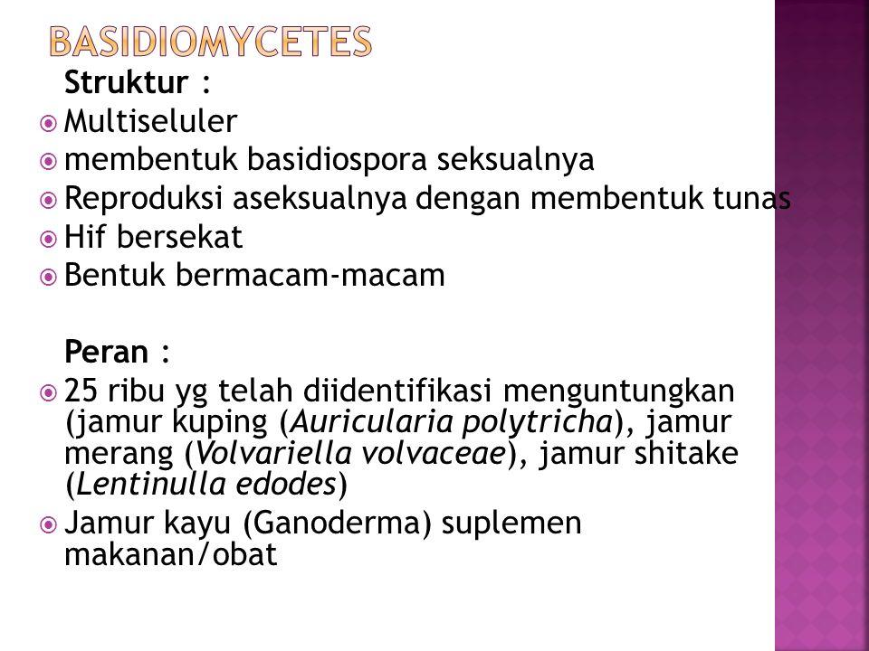 Struktur :  Multiseluler  membentuk basidiospora seksualnya  Reproduksi aseksualnya dengan membentuk tunas  Hif bersekat  Bentuk bermacam-macam Peran :  25 ribu yg telah diidentifikasi menguntungkan (jamur kuping (Auricularia polytricha), jamur merang (Volvariella volvaceae), jamur shitake (Lentinulla edodes)  Jamur kayu (Ganoderma) suplemen makanan/obat