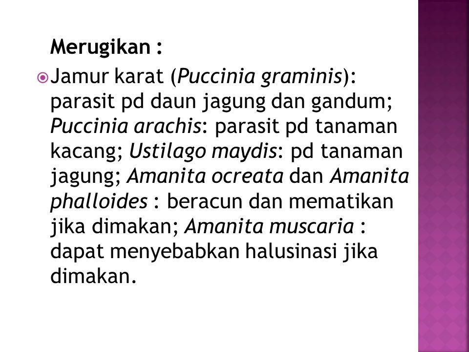 Merugikan :  Jamur karat (Puccinia graminis): parasit pd daun jagung dan gandum; Puccinia arachis: parasit pd tanaman kacang; Ustilago maydis: pd tan