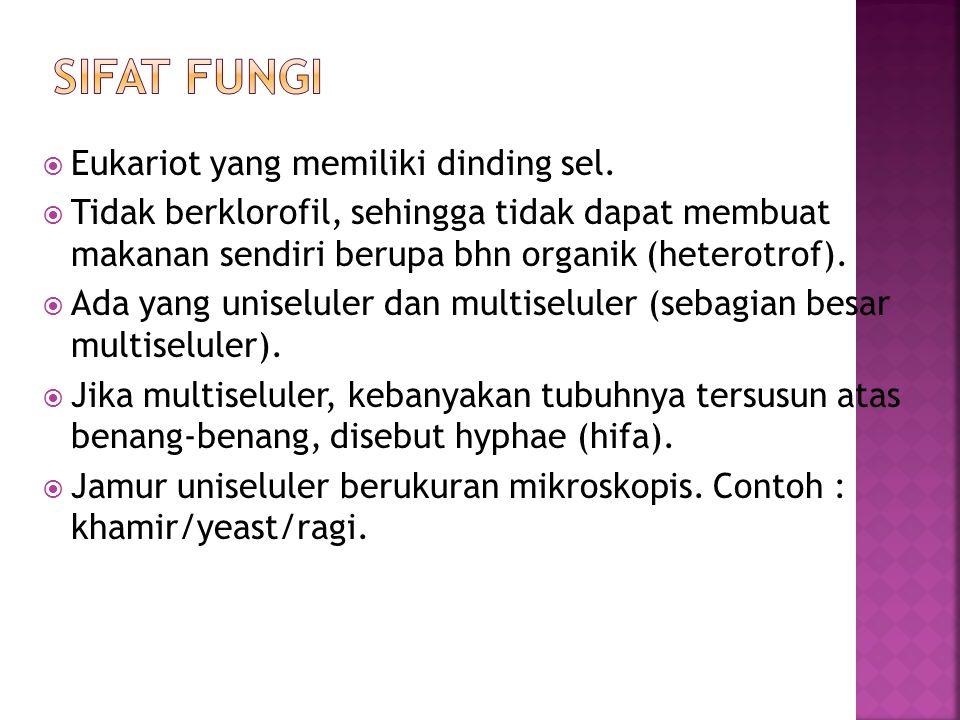  Eukariot yang memiliki dinding sel.  Tidak berklorofil, sehingga tidak dapat membuat makanan sendiri berupa bhn organik (heterotrof).  Ada yang un