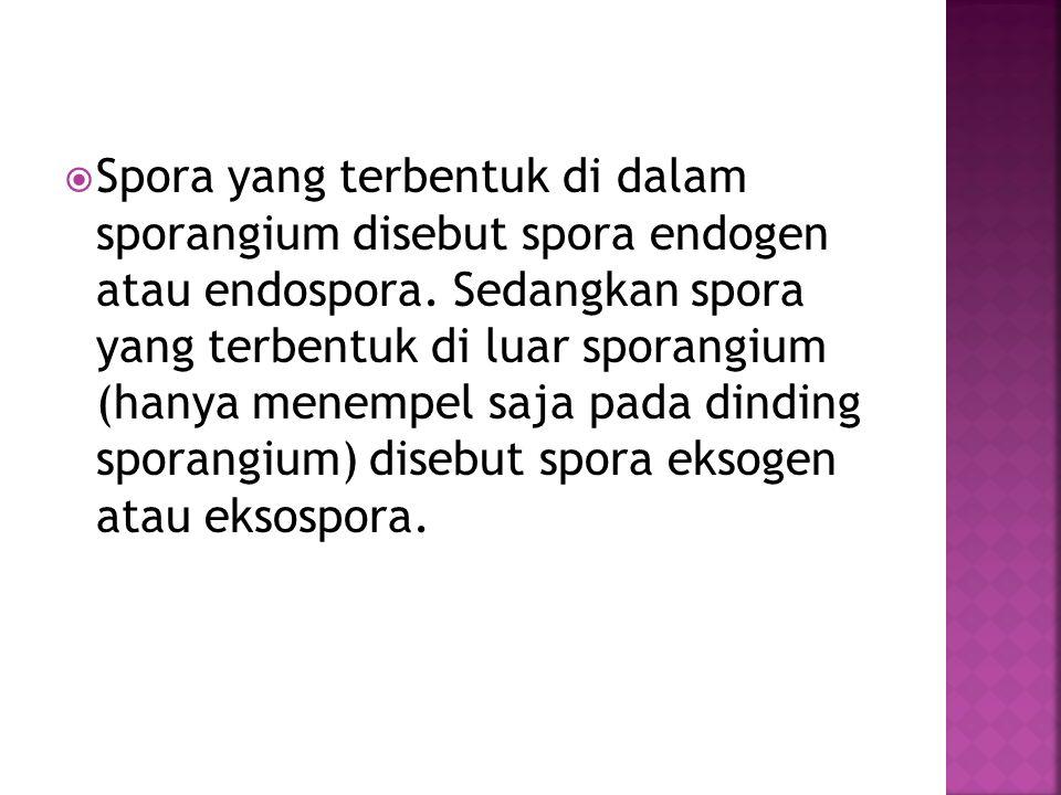  Spora yang terbentuk di dalam sporangium disebut spora endogen atau endospora. Sedangkan spora yang terbentuk di luar sporangium (hanya menempel saj