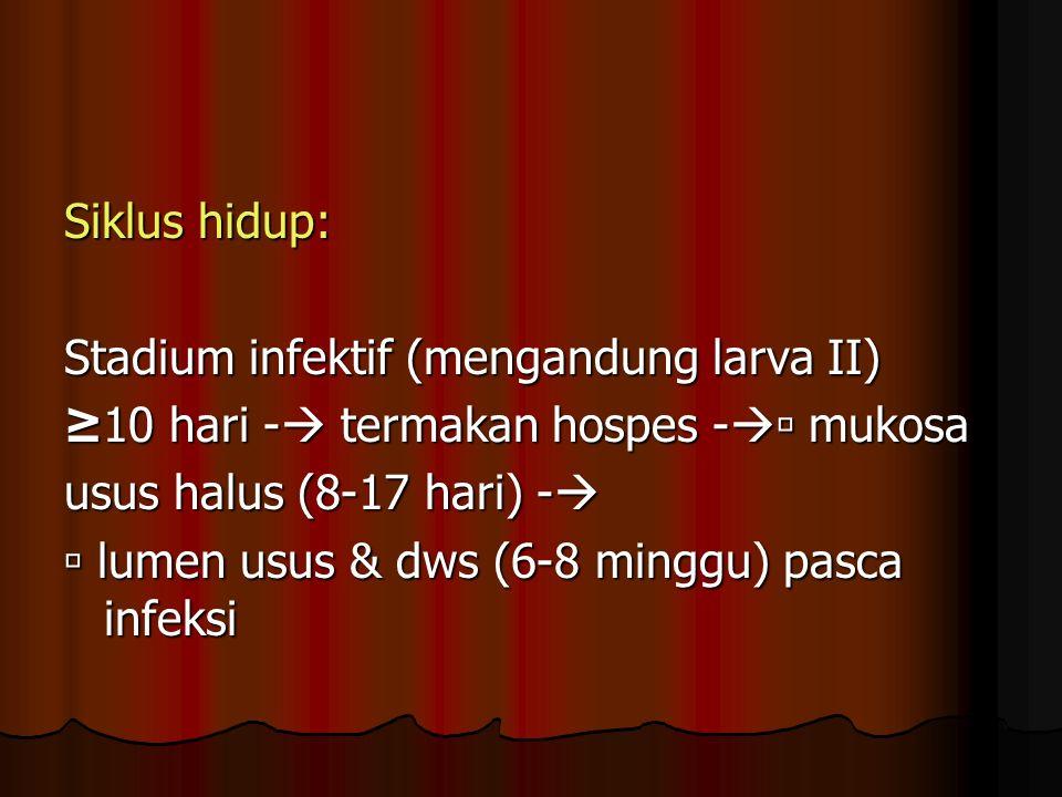 Siklus hidup: Stadium infektif (mengandung larva II) ≥10 hari -  termakan hospes -  mukosa usus halus (8-17 hari) -   lumen usus & dws (6-8 minggu) pasca infeksi