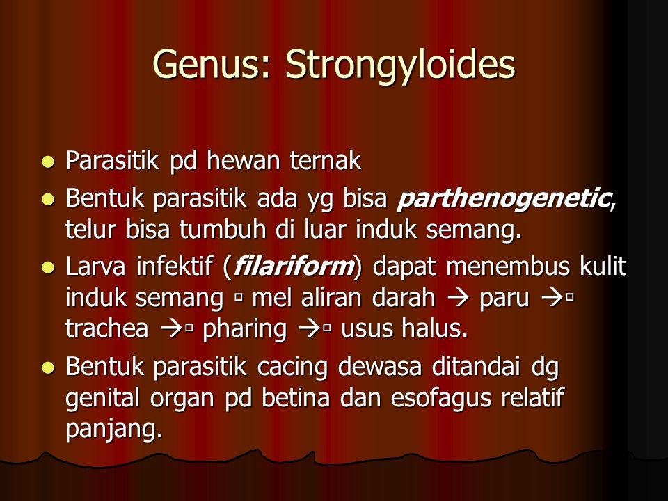 Genus: Strongyloides Parasitik pd hewan ternak Parasitik pd hewan ternak Bentuk parasitik ada yg bisa parthenogenetic, telur bisa tumbuh di luar induk semang.