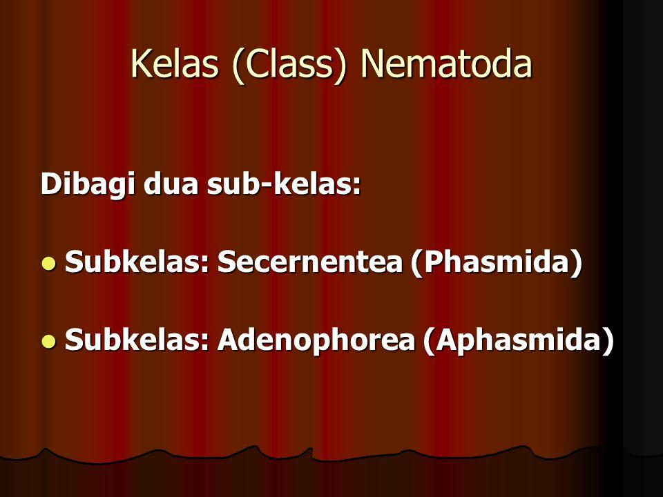 Kelas (Class) Nematoda Dibagi dua sub-kelas: Subkelas: Secernentea (Phasmida) Subkelas: Secernentea (Phasmida) Subkelas: Adenophorea (Aphasmida) Subkelas: Adenophorea (Aphasmida)