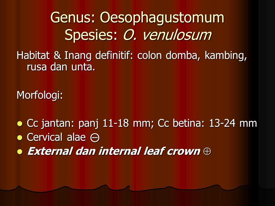Genus: Oesophagustomum Spesies: O.