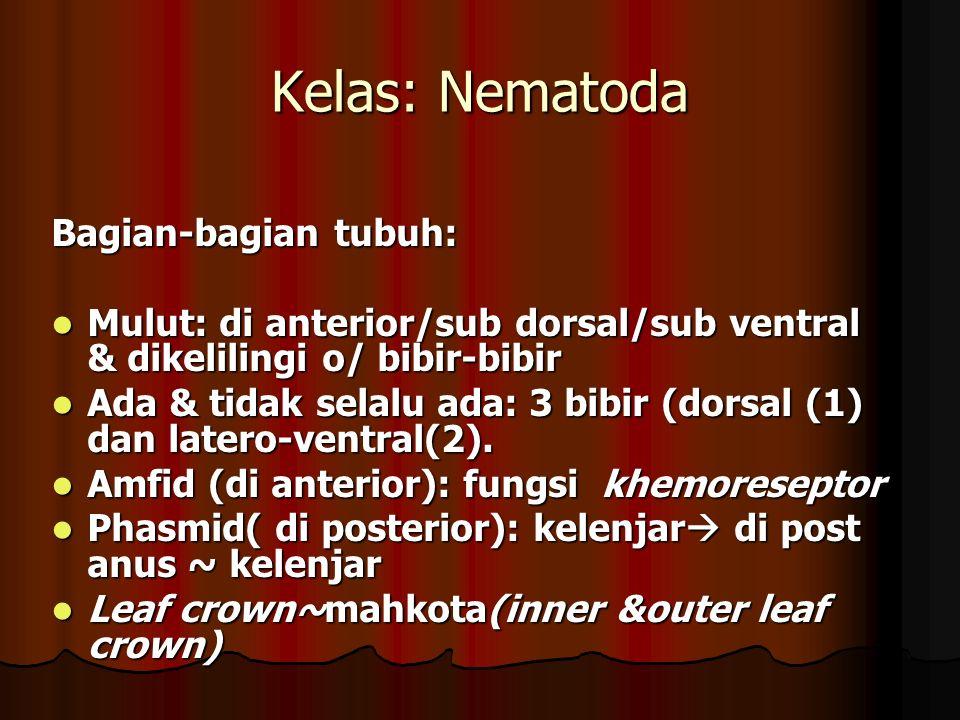 Kelas: Nematoda Bagian-bagian tubuh: Mulut: di anterior/sub dorsal/sub ventral & dikelilingi o/ bibir-bibir Mulut: di anterior/sub dorsal/sub ventral & dikelilingi o/ bibir-bibir Ada & tidak selalu ada: 3 bibir (dorsal (1) dan latero-ventral(2).