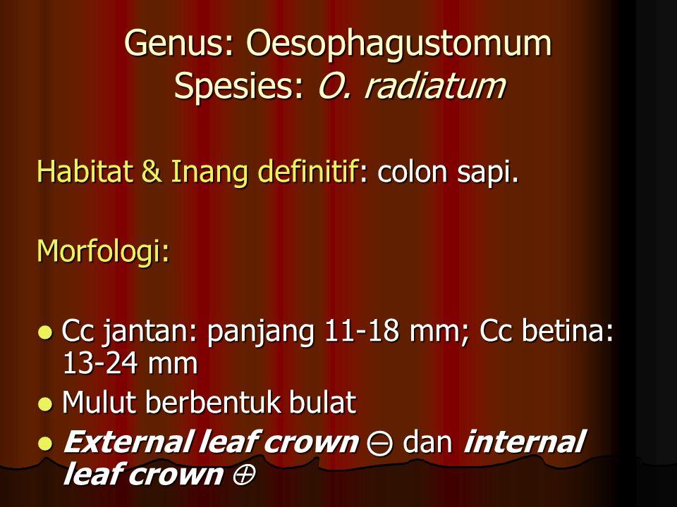 Genus: Oesophagustomum Spesies: O.radiatum Habitat & Inang definitif: colon sapi.